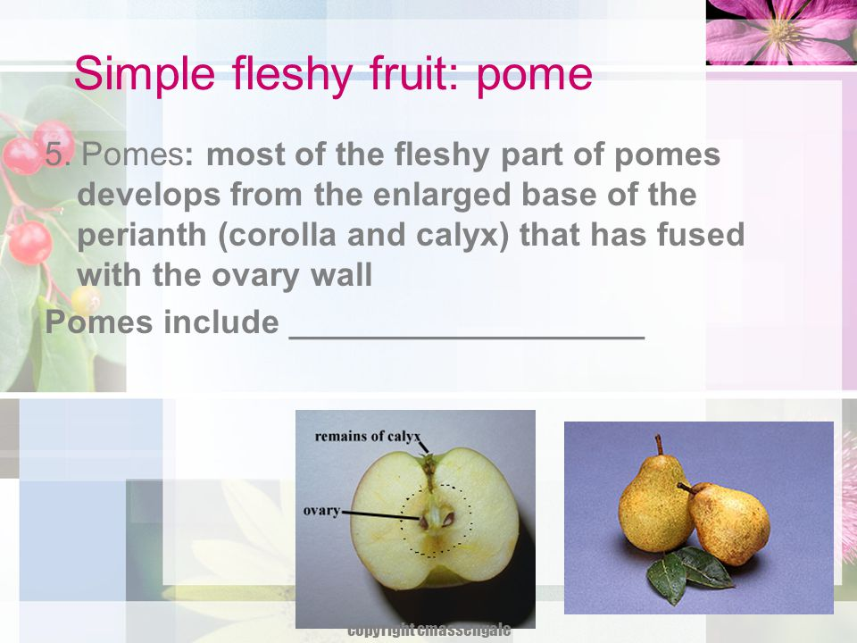 Simple fleshy fruit: pome 5. Pomes: most of the fleshy part of pomes develops from the enlarged base of the perianth (corolla and calyx) that has fuse