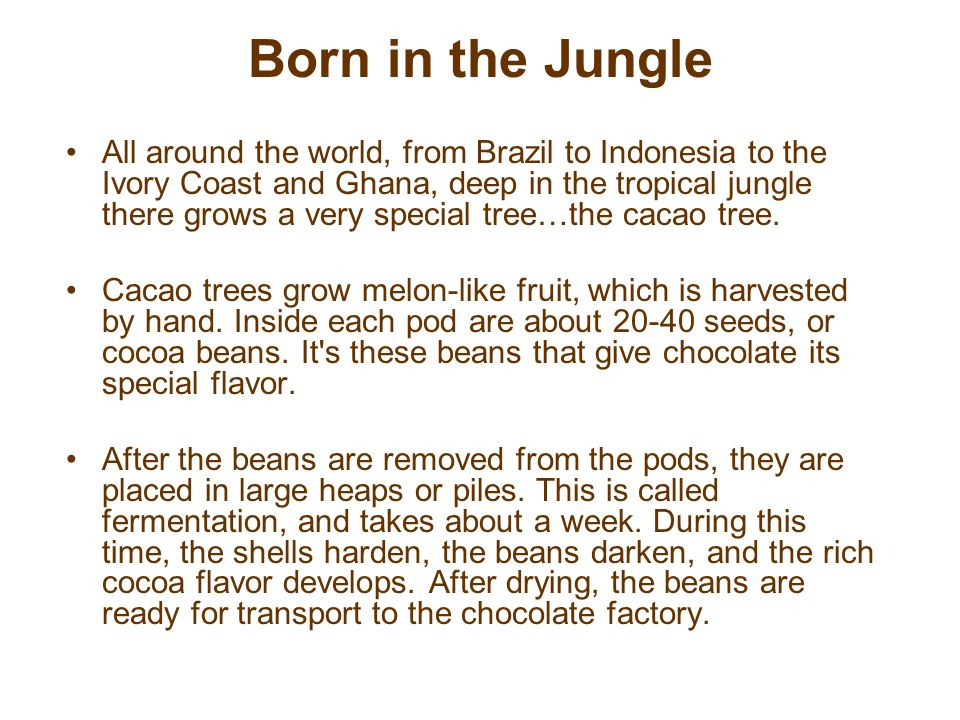 Born in the Jungle All around the world, from Brazil to Indonesia to the Ivory Coast and Ghana, deep in the tropical jungle there grows a very special tree…the cacao tree.