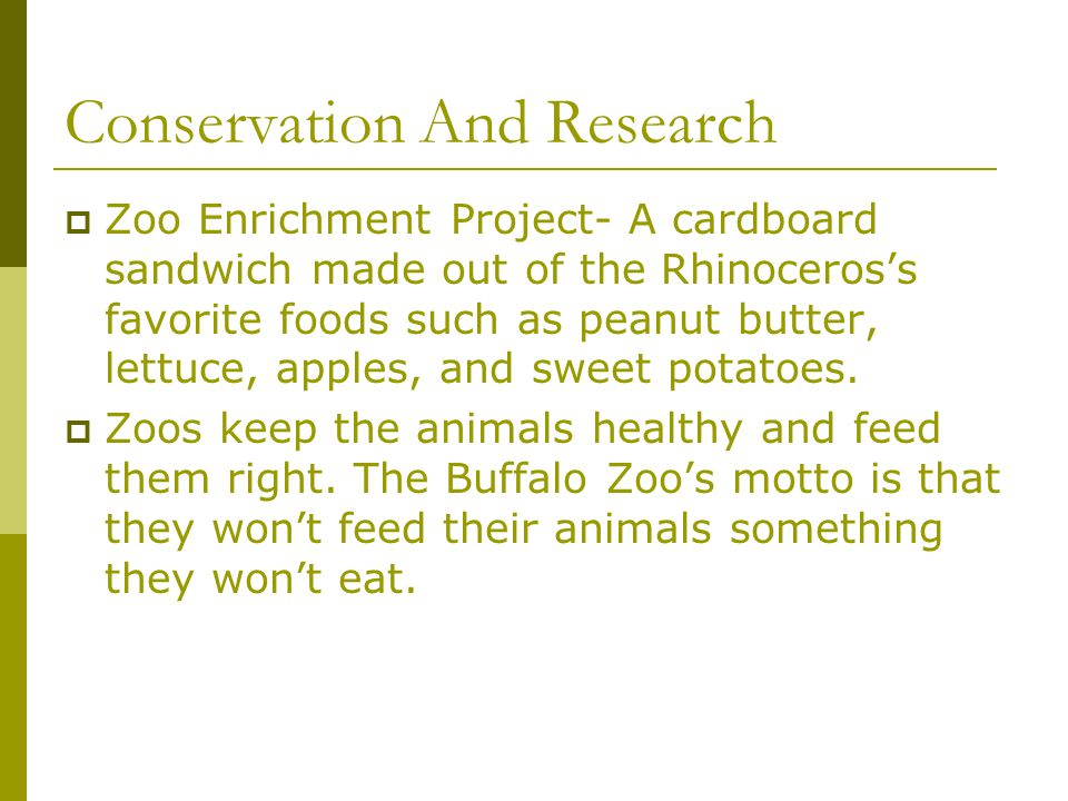 Conservation And Research  Zoo Enrichment Project- A cardboard sandwich made out of the Rhinoceros's favorite foods such as peanut butter, lettuce, a