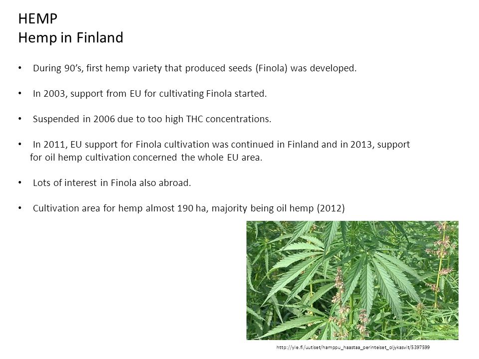 HEMP Hemp in Finland During 90's, first hemp variety that produced seeds (Finola) was developed.