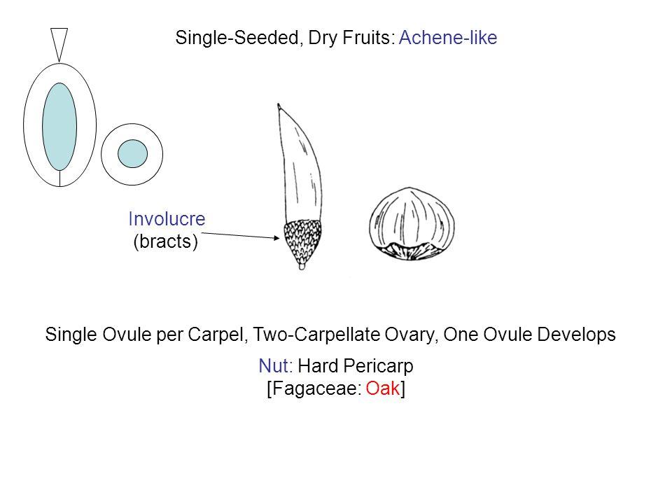 Nut: Hard Pericarp [Fagaceae: Oak] Involucre (bracts) Single Ovule per Carpel, Two-Carpellate Ovary, One Ovule Develops Single-Seeded, Dry Fruits: Ach