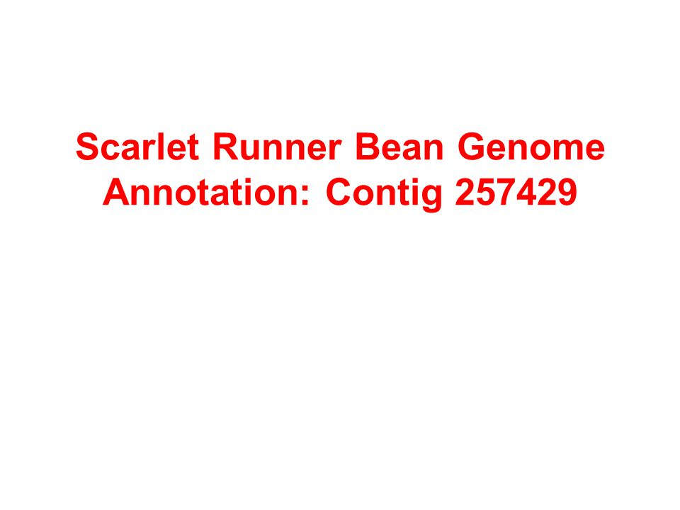 Scarlet Runner Bean Genome Annotation: Contig 257429