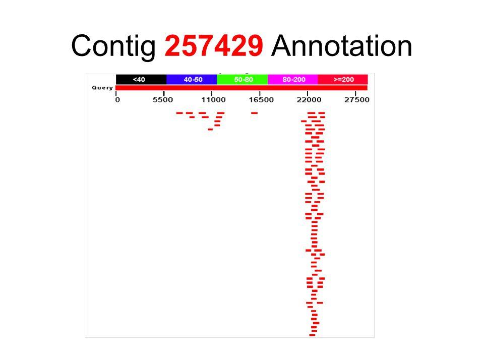Contig 257429 Annotation
