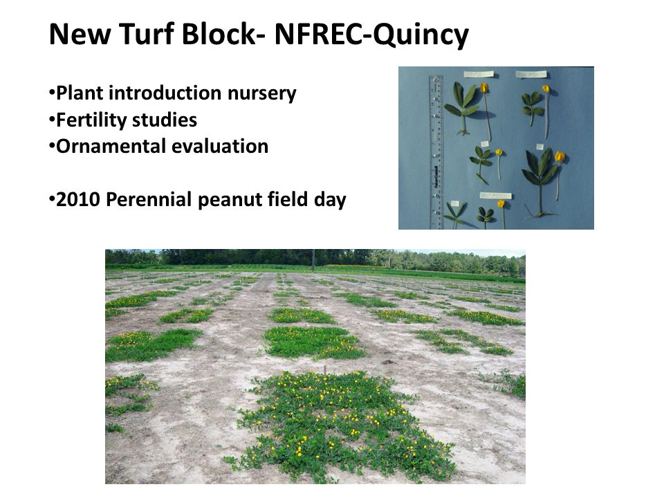 New Turf Block- NFREC-Quincy Plant introduction nursery Fertility studies Ornamental evaluation 2010 Perennial peanut field day