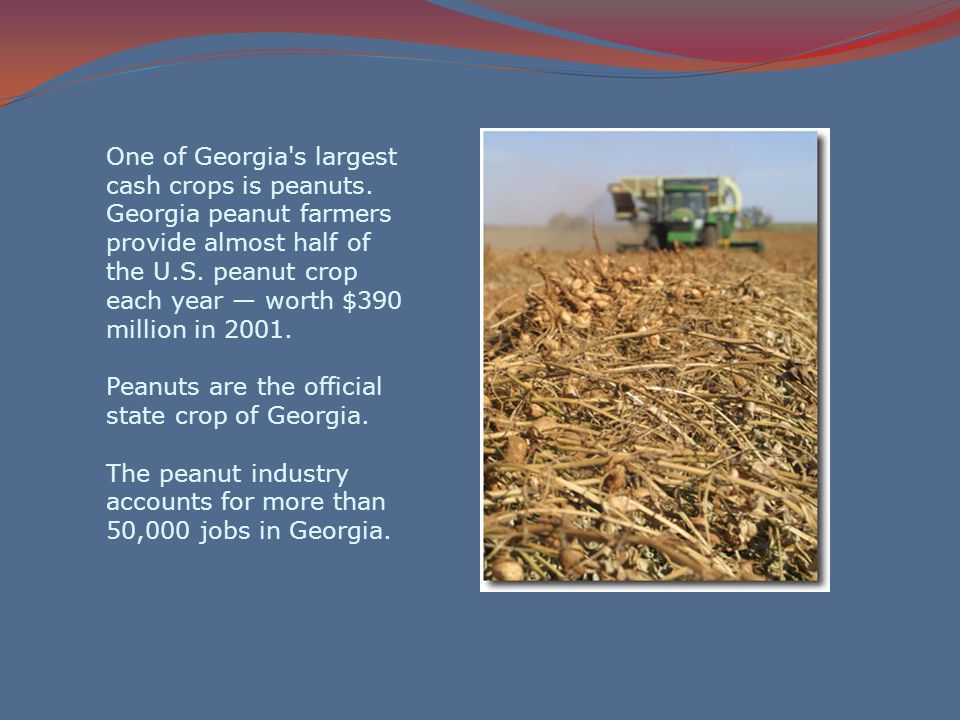 One of Georgia s largest cash crops is peanuts.