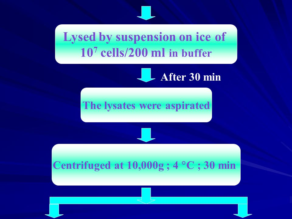 Lysed by suspension on ice of 10 7 cells/200 ml in buffer The lysates were aspirated Centrifuged at 10,000g ; 4  C ; 30 min After 30 min