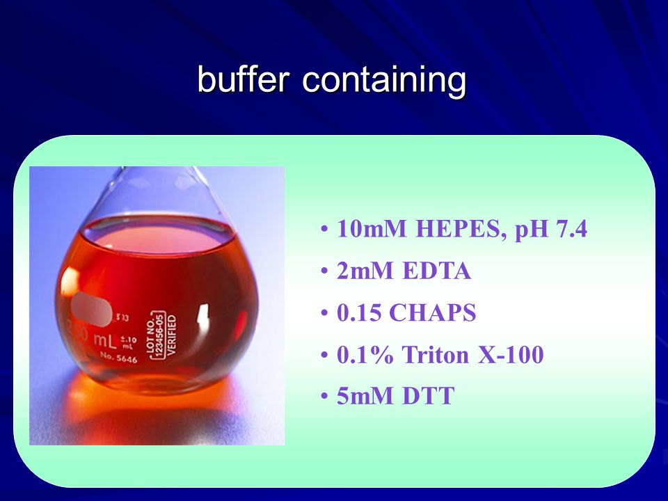 buffer containing 10mM HEPES, pH 7.4 2mM EDTA 0.15 CHAPS 0.1% Triton X-100 5mM DTT