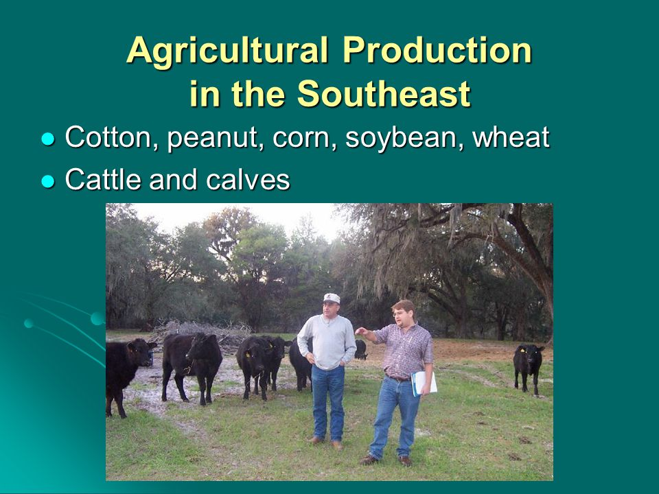 Agricultural Production in the Southeast Cotton, peanut, corn, soybean, wheat Cotton, peanut, corn, soybean, wheat Cattle and calves Cattle and calves