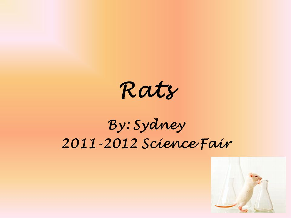 Rats By: Sydney 2011-2012 Science Fair