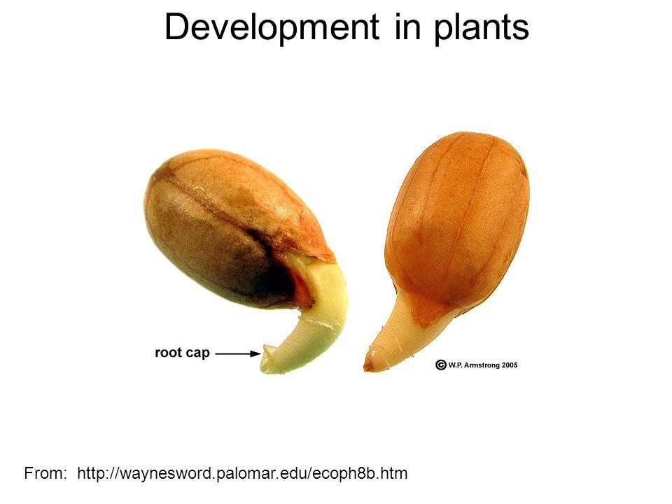 Development in plants From: http://waynesword.palomar.edu/ecoph8b.htm