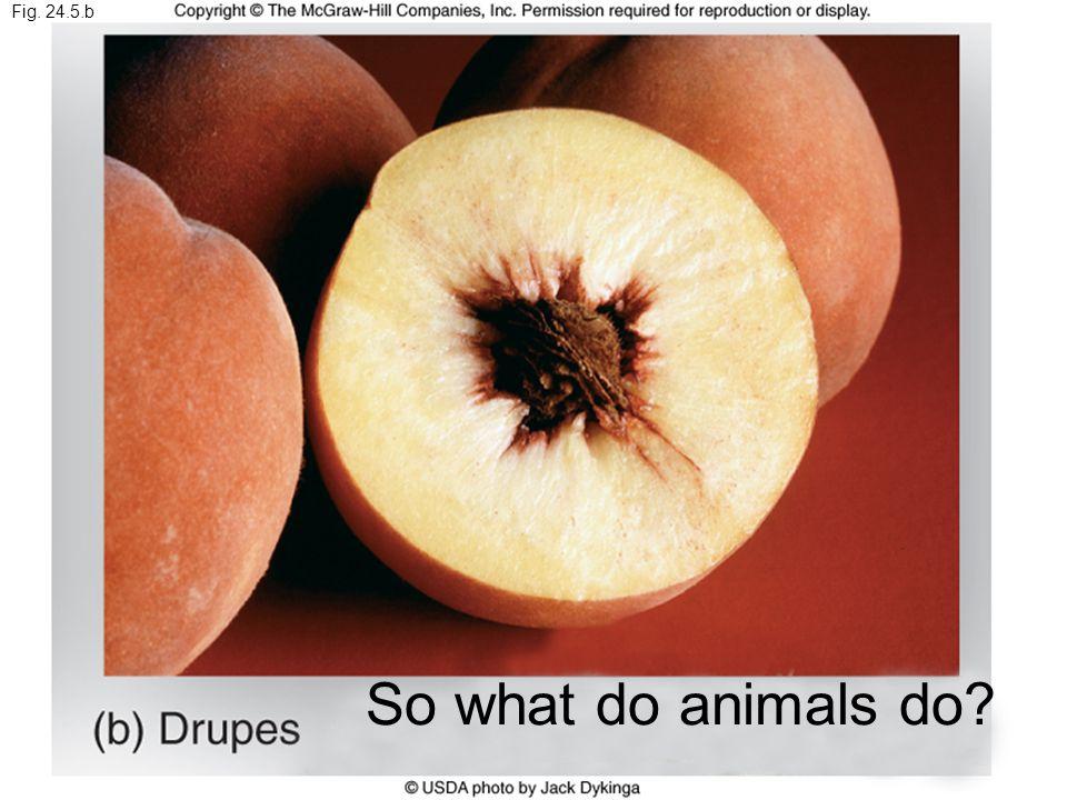 Fig. 24.5.b So what do animals do