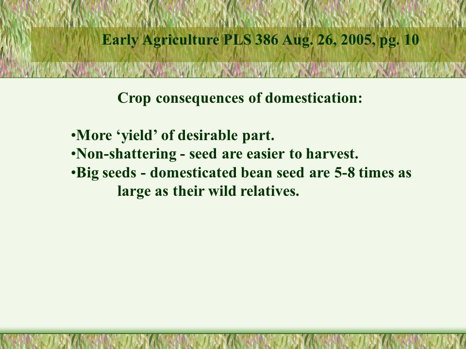 Crop consequences of domestication: More 'yield' of desirable part.