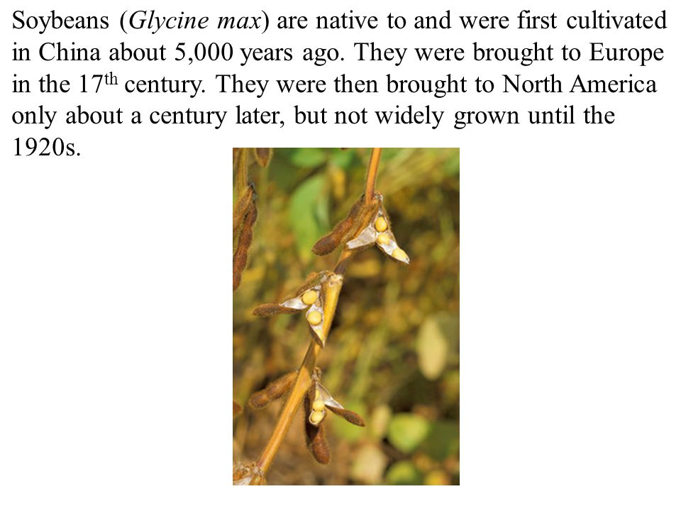 Soybeans (Glycine max) are native to and were first cultivated in China about 5,000 years ago.