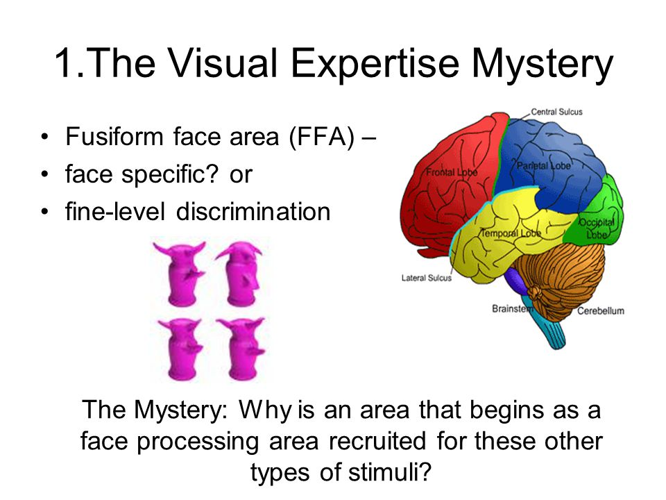 1.The Visual Expertise Mystery Fusiform face area (FFA) – face specific.