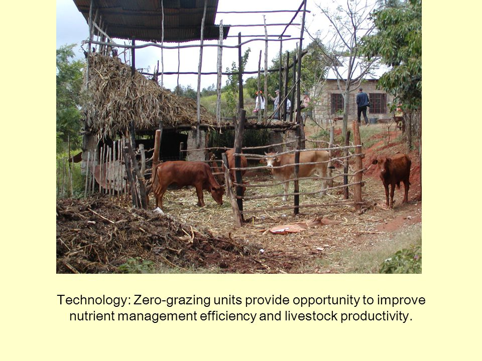 Technology: Zero-grazing units provide opportunity to improve nutrient management efficiency and livestock productivity.