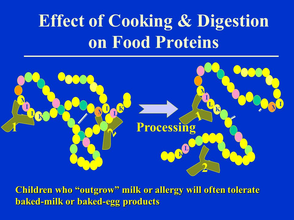 Effect of Cooking & Digestion on Food Proteins Processing 1 1 2 2 L L I M K M I M I I M K L K L K Children who outgrow milk or allergy will often tolerate baked-milk or baked-egg products