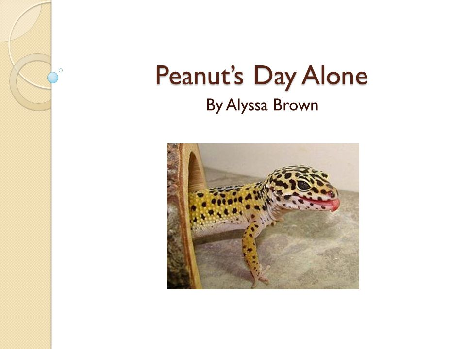 Peanut's Day Alone By Alyssa Brown