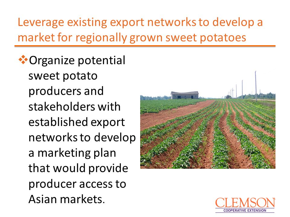 Leverage existing export networks to develop a market for regionally grown sweet potatoes  Organize potential sweet potato producers and stakeholders with established export networks to develop a marketing plan that would provide producer access to Asian markets.