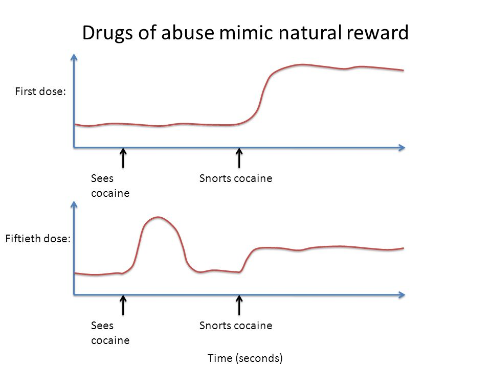Drugs of abuse mimic natural reward Time (seconds) Snorts cocaineSees cocaine First dose: Snorts cocaineSees cocaine Fiftieth dose: