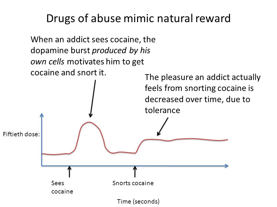 Drugs of abuse mimic natural reward Time (seconds) Snorts cocaineSees cocaine Fiftieth dose: When an addict sees cocaine, the dopamine burst produced by his own cells motivates him to get cocaine and snort it.
