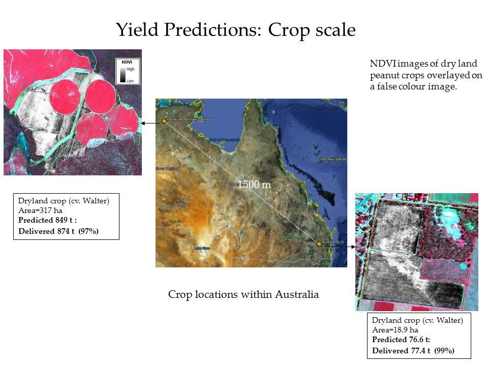 Yield Predictions: Crop scale Dryland crop (cv.