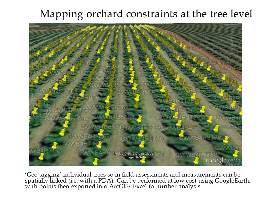 Mapping orchard constraints at the tree level 'Geo tagging' individual trees so in field assessments and measurements can be spatially linked (i.e.