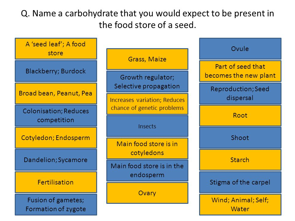 Q.Name a carbohydrate that you would expect to be present in the food store of a seed.