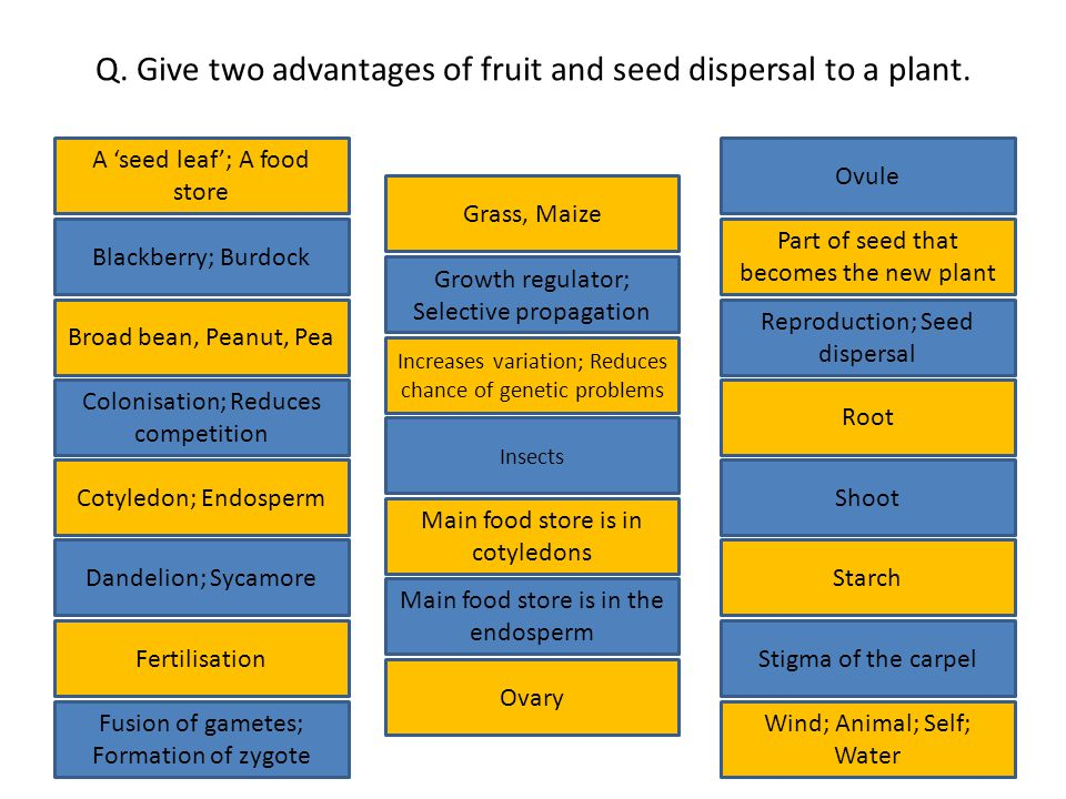 Q.Give two advantages of fruit and seed dispersal to a plant.