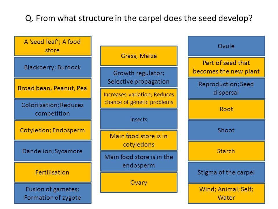 Q.From what structure in the carpel does the seed develop.