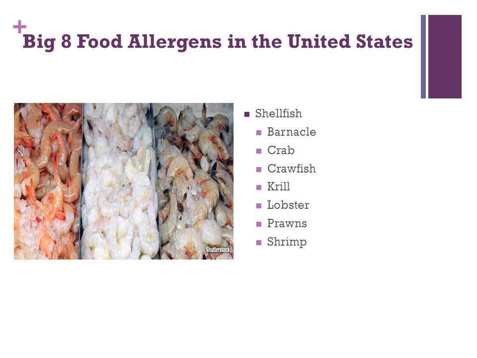+ Big 8 Food Allergens in the United States Shellfish Barnacle Crab Crawfish Krill Lobster Prawns Shrimp