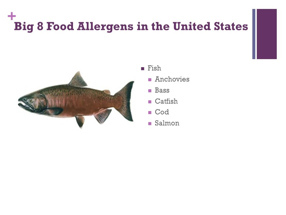 + Big 8 Food Allergens in the United States Fish Anchovies Bass Catfish Cod Salmon