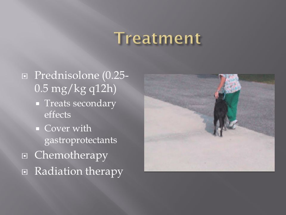  Prednisolone (0.25- 0.5 mg/kg q12h)  Treats secondary effects  Cover with gastroprotectants  Chemotherapy  Radiation therapy