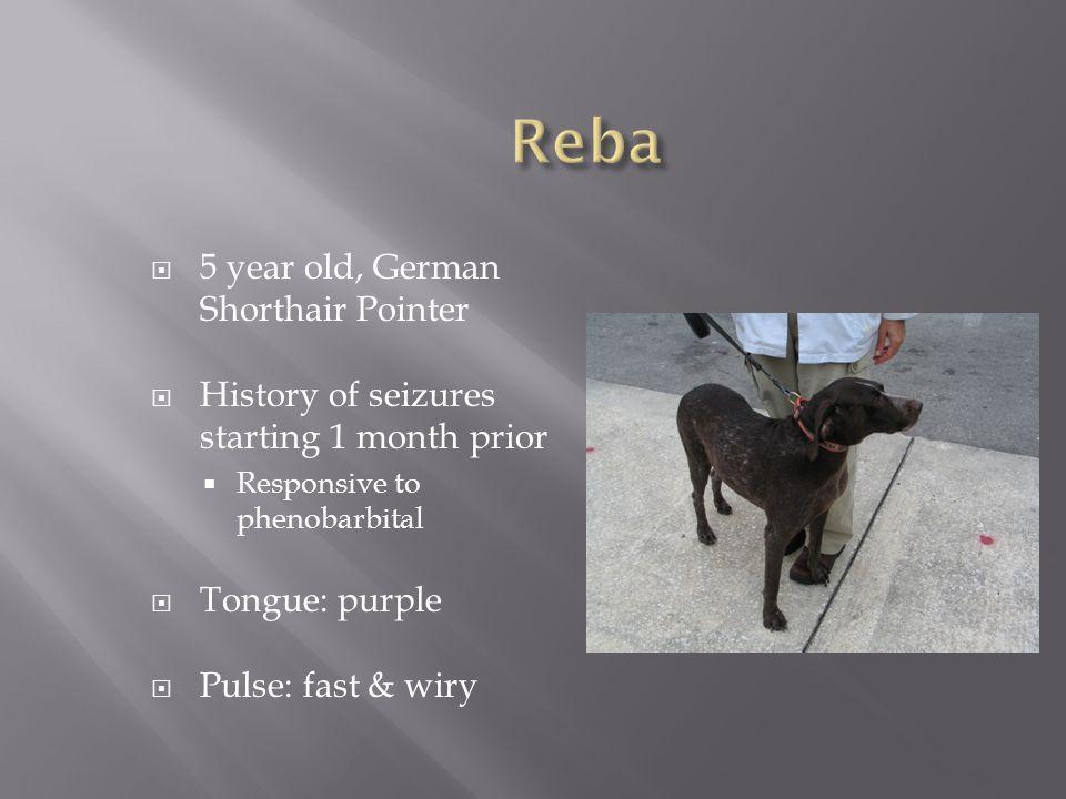  5 year old, German Shorthair Pointer  History of seizures starting 1 month prior  Responsive to phenobarbital  Tongue: purple  Pulse: fast & wir