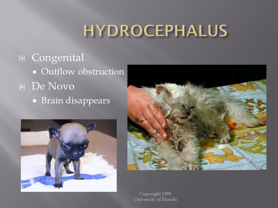 Copyright 1999 University of Florida  Congenital  Outflow obstruction  De Novo  Brain disappears