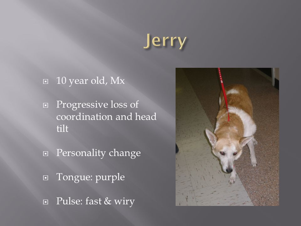  10 year old, Mx  Progressive loss of coordination and head tilt  Personality change  Tongue: purple  Pulse: fast & wiry