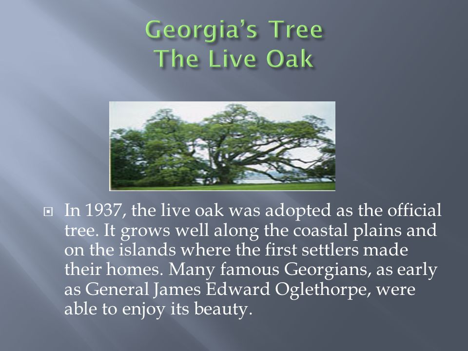  In 1937, the live oak was adopted as the official tree. It grows well along the coastal plains and on the islands where the first settlers made thei