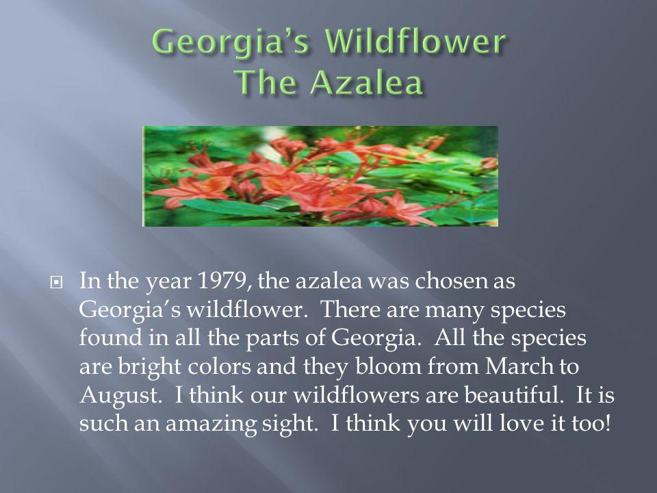  In the year 1979, the azalea was chosen as Georgia's wildflower.