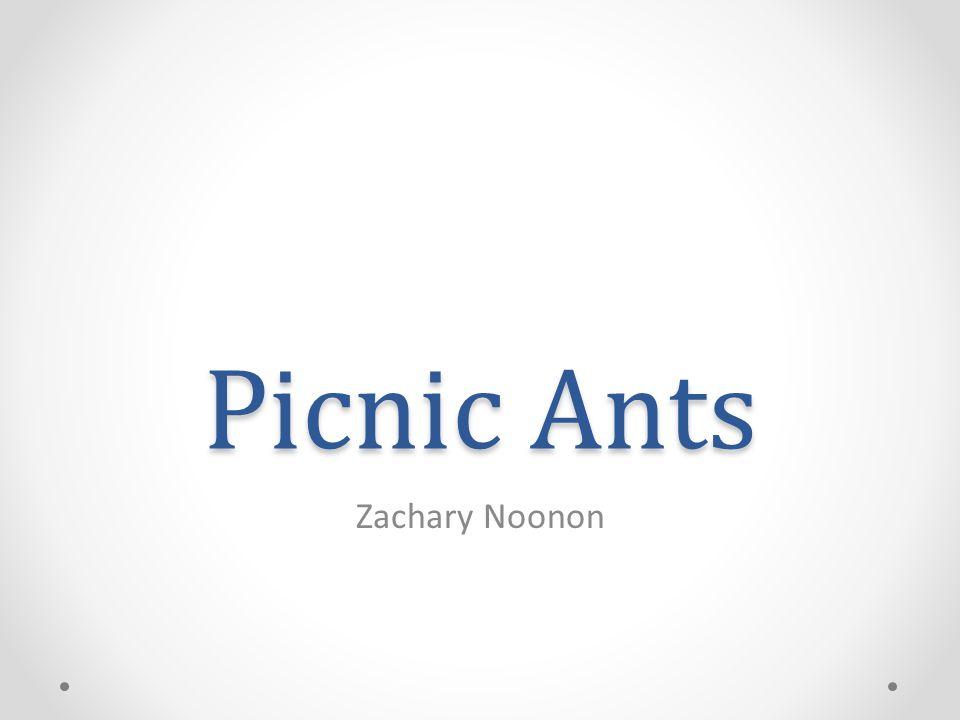 Picnic Ants Zachary Noonon