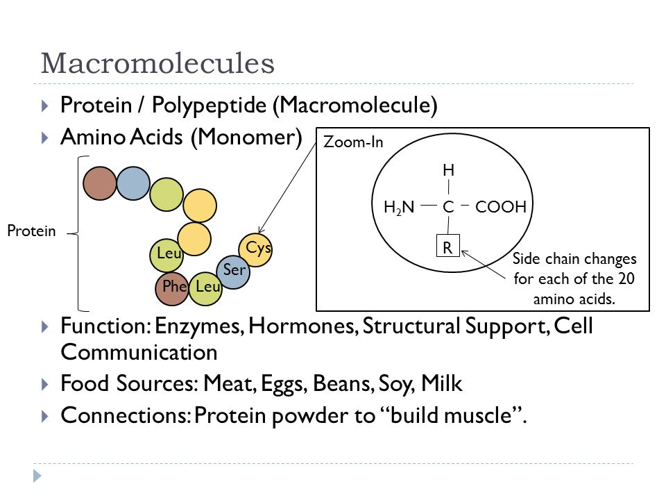 Macromolecules  Protein / Polypeptide (Macromolecule)  Amino Acids (Monomer)  Function: Enzymes, Hormones, Structural Support, Cell Communication  Food Sources: Meat, Eggs, Beans, Soy, Milk  Connections: Protein powder to build muscle .