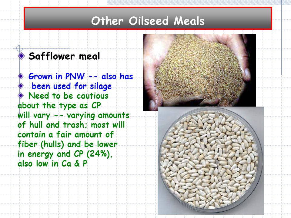 Other Oilseed Meals Safflower meal Grown in PNW -- also has been used for silage Need to be cautious about the type as CP will vary -- varying amounts of hull and trash; most will contain a fair amount of fiber (hulls) and be lower in energy and CP (24%), also low in Ca & P