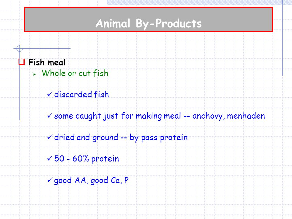 Animal By-Products  Fish meal  Whole or cut fish discarded fish some caught just for making meal -- anchovy, menhaden dried and ground -- by pass protein 50 - 60% protein good AA, good Ca, P