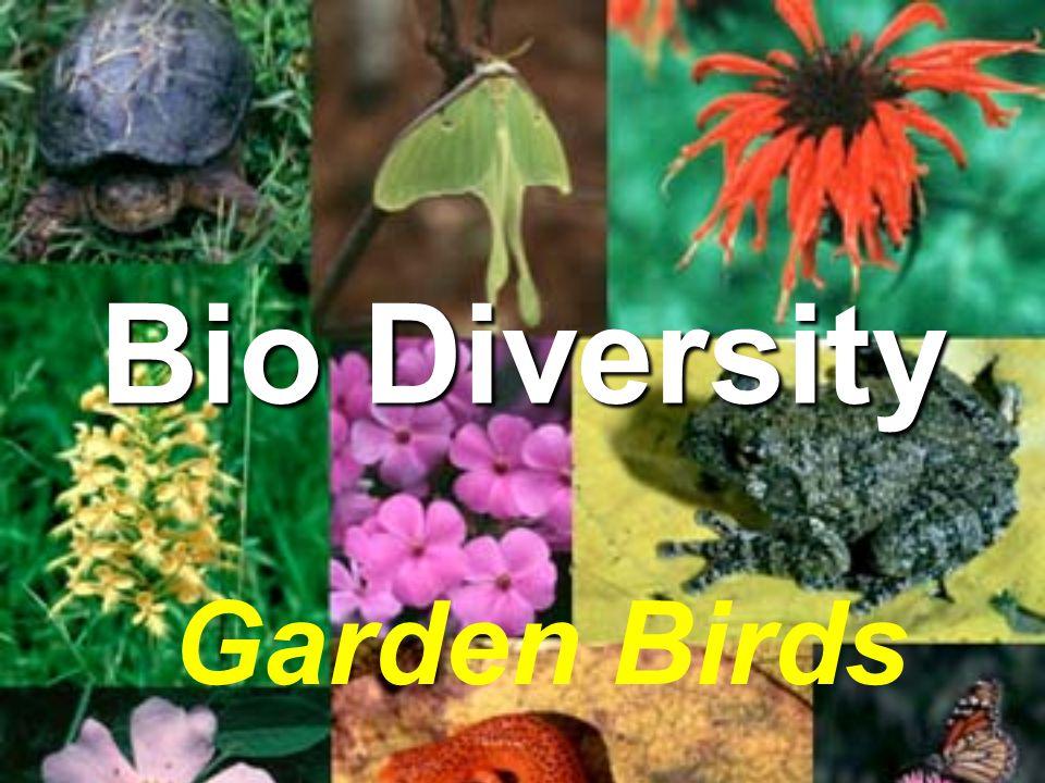 Bio Diversity Garden Birds