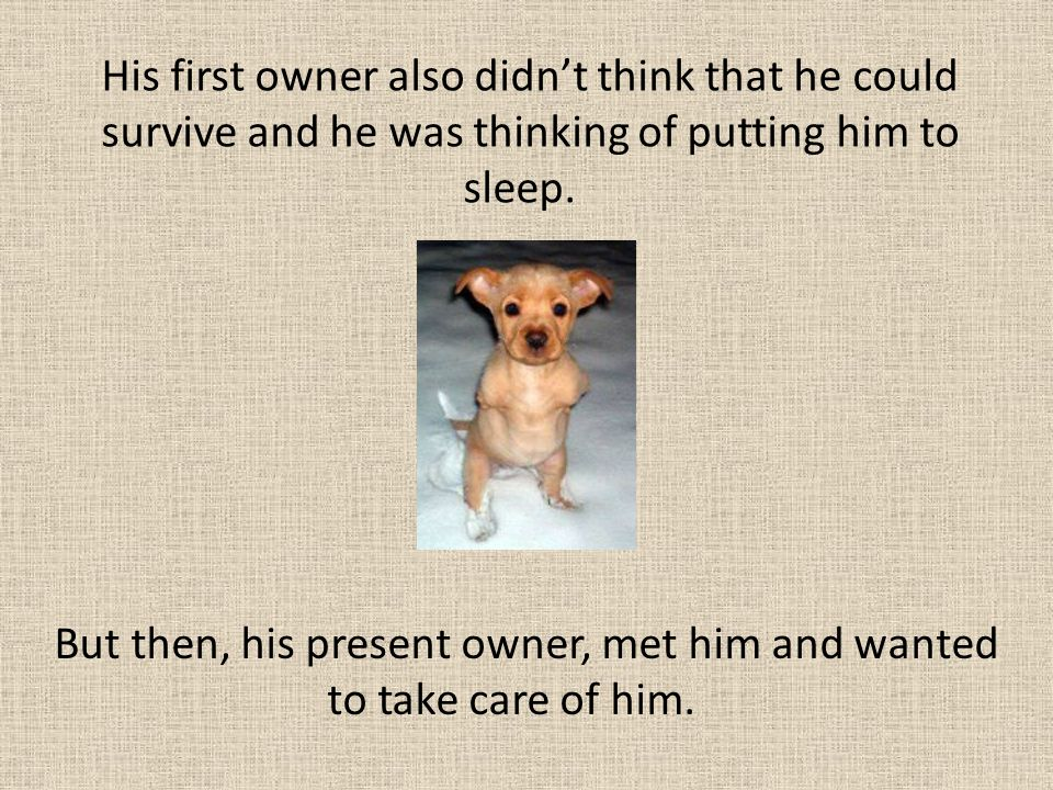 His first owner also didn't think that he could survive and he was thinking of putting him to sleep. But then, his present owner, met him and wanted t