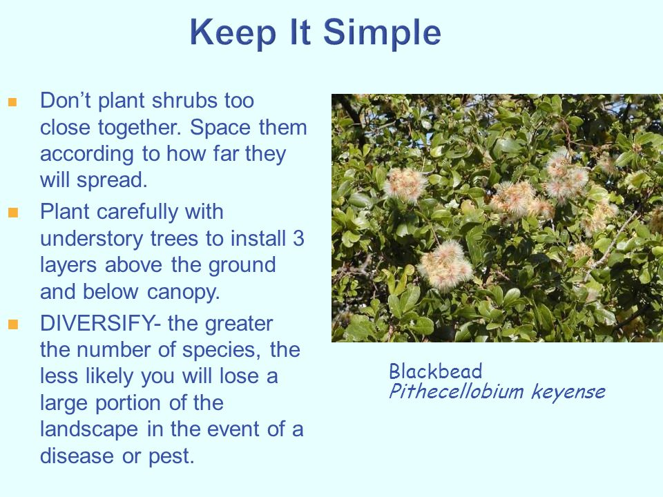 Don't plant shrubs too close together. Space them according to how far they will spread. Plant carefully with understory trees to install 3 layers abo