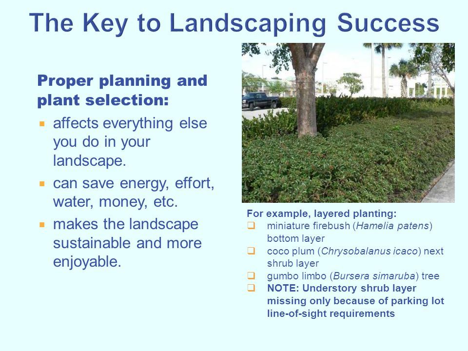 Proper planning and plant selection:  affects everything else you do in your landscape.  can save energy, effort, water, money, etc.  makes the lan