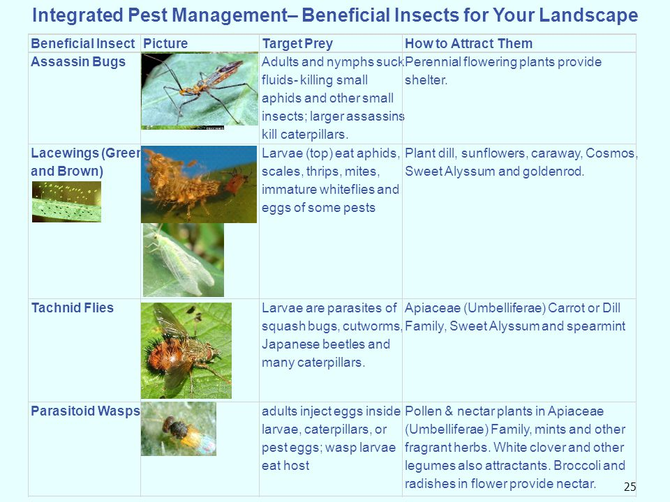 25 Integrated Pest Management– Beneficial Insects for Your Landscape Beneficial InsectPictureTarget PreyHow to Attract Them Assassin BugsAdults and ny