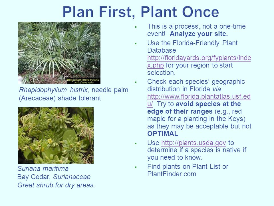  This is a process, not a one-time event! Analyze your site.  Use the Florida-Friendly Plant Database http://floridayards.org/fyplants/inde x.php fo