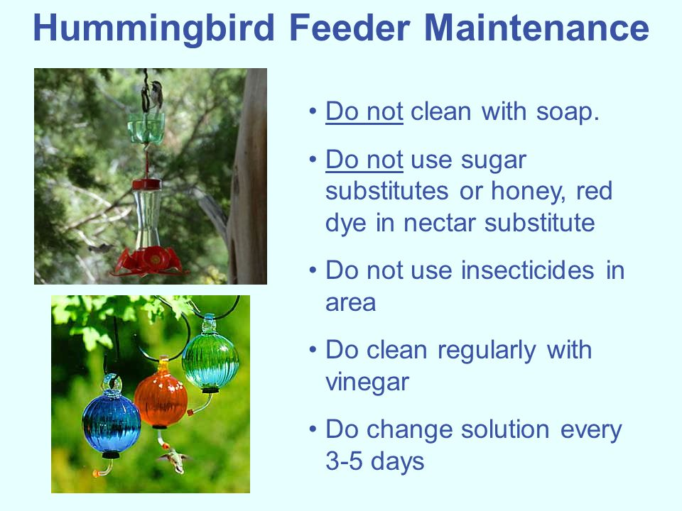 Hummingbird Feeder Maintenance Do not clean with soap. Do not use sugar substitutes or honey, red dye in nectar substitute Do not use insecticides in