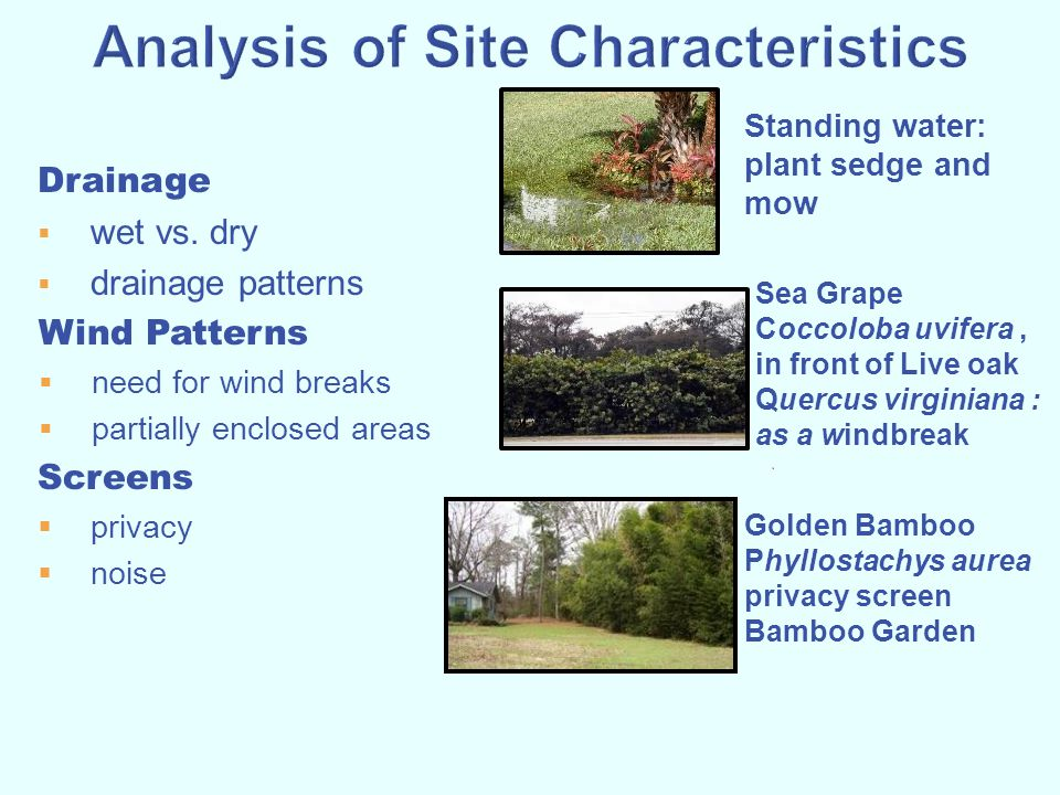 Drainage  wet vs. dry  drainage patterns Wind Patterns  need for wind breaks  partially enclosed areas Screens  privacy  noise Standing water: p