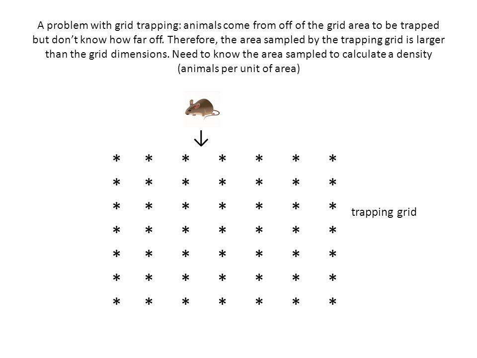 A problem with grid trapping: animals come from off of the grid area to be trapped but don't know how far off. Therefore, the area sampled by the trap